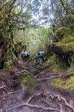 Irau mount hiker Royalty Free Stock Photography