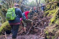 Irau mount hiker Royalty Free Stock Photos