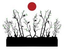 Irds, деревья и солнце Стоковое фото RF