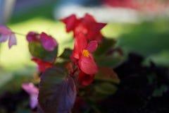 Ired-Blumen und helle gelbe Mitteldetails, die auf die Oberseite des grünen Stockes blühen Machen Sie es attraktiv im Garde lizenzfreies stockfoto