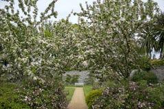 Ireland. Amazing spring garden with flowers Stock Photography