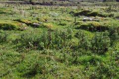 The Burren Royalty Free Stock Photos