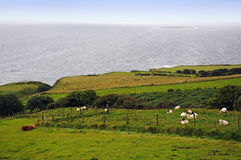Ireland, the green island. Stock Image
