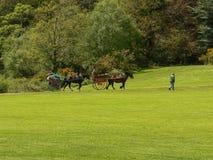 ireland Killarney - Cill Airne Fotografering för Bildbyråer