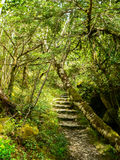Ireland. Killarney National Park Stock Photo