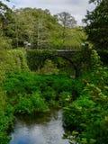 ireland Killarney nationalpark Arkivbilder