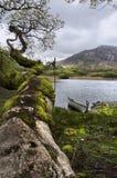 Ireland landscape Stock Photos