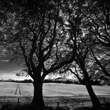 Ireland. Landscape in Northern Ireland in black & white. Scenery of Games of Thrones Royalty Free Stock Photography
