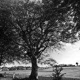Ireland. Landscape in Northern Ireland in black & white. Scenery of Games of Thrones Stock Image