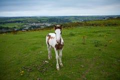 Ireland landscape Royalty Free Stock Photography