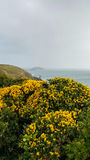 Ireland. Landscapes. The yellow color of flowered brooms illuminates the Ballycotton coastline wrapped in the greyhound of a daunting day Stock Photo