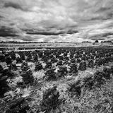 Ireland. Northern Ireland in black & white. Scenery of Games of Thrones Royalty Free Stock Photo