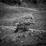 Ireland. Northern Ireland in black & white. Scenery of Games of Thrones Stock Photography