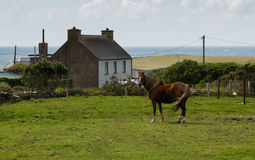 Ireland traditional house with horse Stock Images
