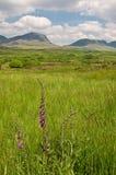 ireland zachód krajobrazowy sceniczny wibrujący Zdjęcie Royalty Free