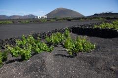 Irgendein Platz in Lanzarote Lizenzfreie Stockfotos