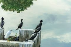 Irgendein schwarzer Vogel stand oben in der Front einen Wasserstrom, der den Himmel reflektiert stockfotos