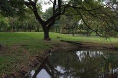 Irgendeine Ecke in Fäule fai Park kurz vor dem Regen stockfoto