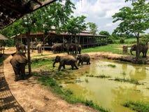 Irgendwelche Rettungselefanten, die den Boden von ElephantsWorld außerhalb Kanchanaburi Thailand durchstreifen stockbilder