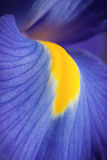 Iride blu Immagini Stock Libere da Diritti