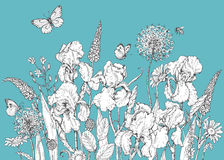 Iride, fiori selvaggi e schizzo degli insetti Fotografia Stock