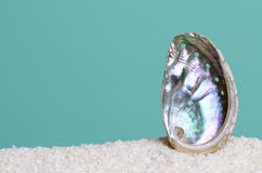 Iridescent abalone shell on white sand on turquoise background Stock Photo