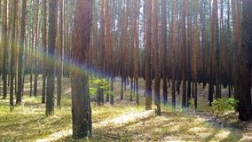 Iridescent beam in the wood Stock Image