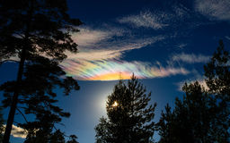 Iridescent clouds (Nacreous Clouds) over silhouetted trees royalty free stock photo