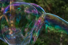 Iridescent large soap bubbles against the background of the forest. stock photos