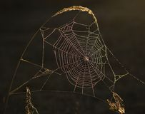 Iridescent ornament. Early in the morning dewdrops on a web were lit by iridescent light./ Rainbow web Royalty Free Stock Photo