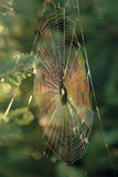 Iridescent Spiderweb. A spiderweb gleaming with prismatic light Stock Photos
