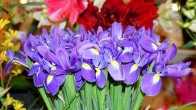 Iridi delicate contro lo sfondo dei fiori Immagine Stock