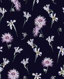 Iridi e crisantemi su un fondo blu scuro Immagine Stock