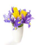 Iridi e tulipani Fotografie Stock