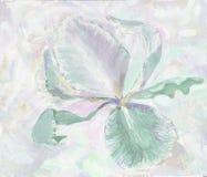 iridi l'illustrazione del fiore dell'estate, la molla, l'icona, bloomin Fotografie Stock Libere da Diritti