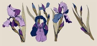 Irins blommar uppsättningen för vektorgemkonst stock illustrationer