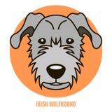 Irirsh猎狼犬画象  在fl样式的传染媒介例证  免版税库存照片