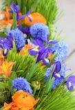Iris à bulbes pourpres d'iris de xiphium, sibirica parmi l'herbe verte et orange et fleurs pourpres photos stock