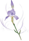 Iris 1 Royalty Free Stock Images