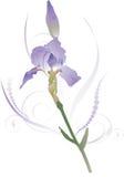 Iris 1 Royalty-vrije Stock Afbeeldingen
