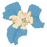 Iris. Vector blue and beige iris in vintage style Royalty Free Stock Photos