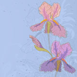 Iris. Hand drawn iris with fantasy flowers and plants Stock Images