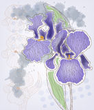 Iris. Artistic picture of beautiful iris Stock Images