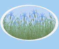 Iris. Photos libres de droits