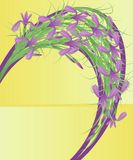 Iris. Image libre de droits
