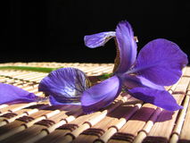 Iris. Flower an iris lays on a table in a solar beam Royalty Free Stock Photo