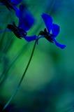 Iris Arkivbild