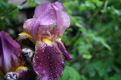 Iris Stockfotografie