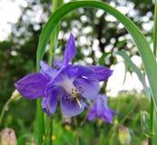 Iris. Disbanded its petals in a spring garden stock photos
