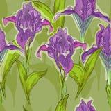 Iris Στοκ Εικόνες